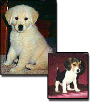 Images of Puppies