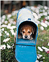 Image of Dog in Mailbox